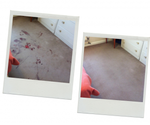carpet cleaning in kent